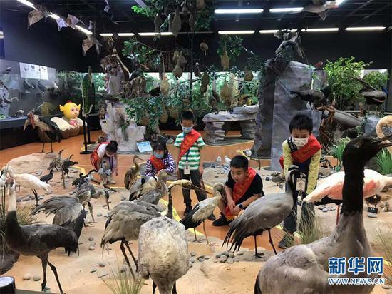 小朋友们认真观看鸟类标本(5月15日摄)。新华网发(供图)
