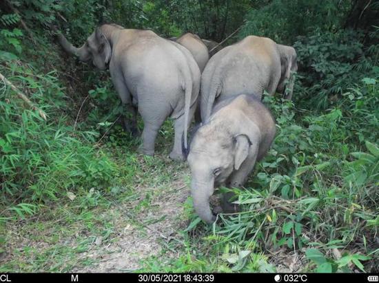 象群逼近作物保护与育种基地 中科院西双版纳植物园紧急建设防