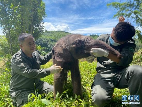 8月29日,救助人员给获救幼象喂奶。