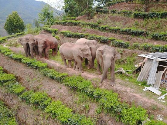 """即将""""营业""""!云南给大象建了个1000亩的专属""""食堂"""""""