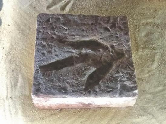恐龙脚印化石