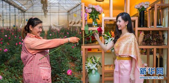 """泰国曼谷的一位女士(右)""""接过""""云南花农""""递出""""的一支鲜花(拼版照片,左图为2月15日新华社记者胡超摄;右图为2月16日新华社记者张可任摄)。"""
