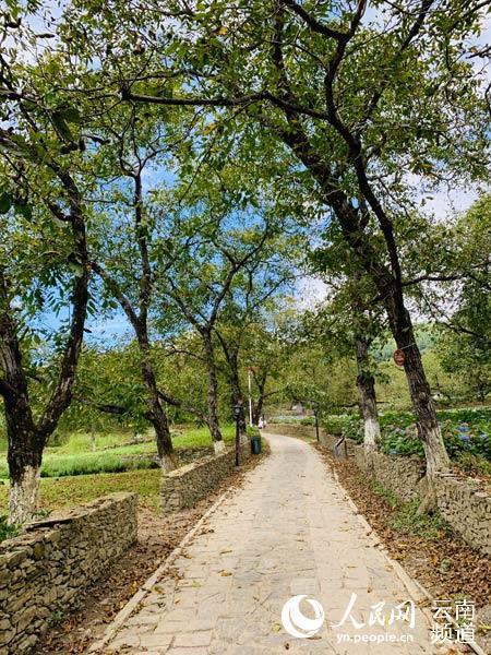 云南漾濞:优质项目助推旅游转型升级