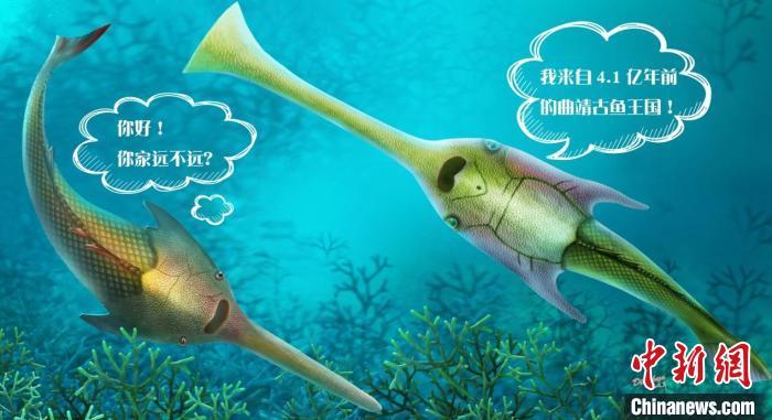 """游动的""""三叉戟"""":长吻三歧鱼(右)与昭通三歧鱼(左)生态复原图(杨定华 绘)"""