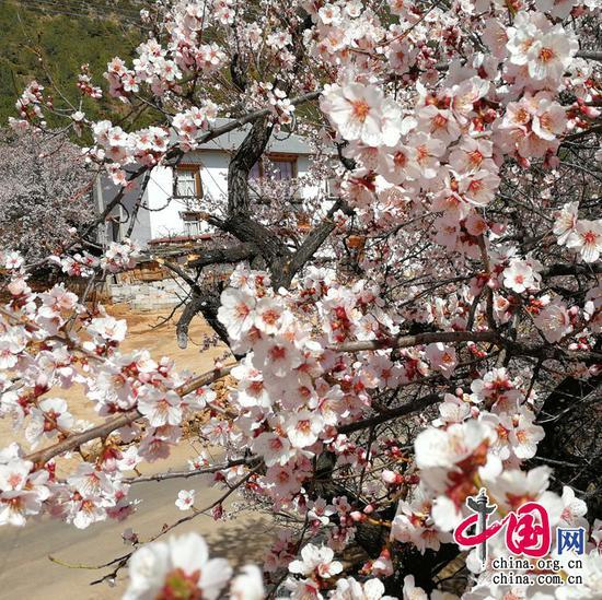 山泉散漫绕阶流,万树桃花映小楼。——元稹《离思五首》摄影 余江