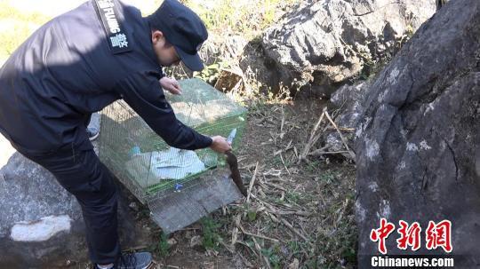 图为民警将黄腹鼬放归大自然。