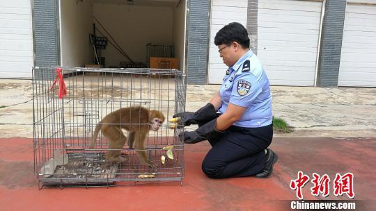 图为森林公安民警给猕猴喂食。 常国轩 摄