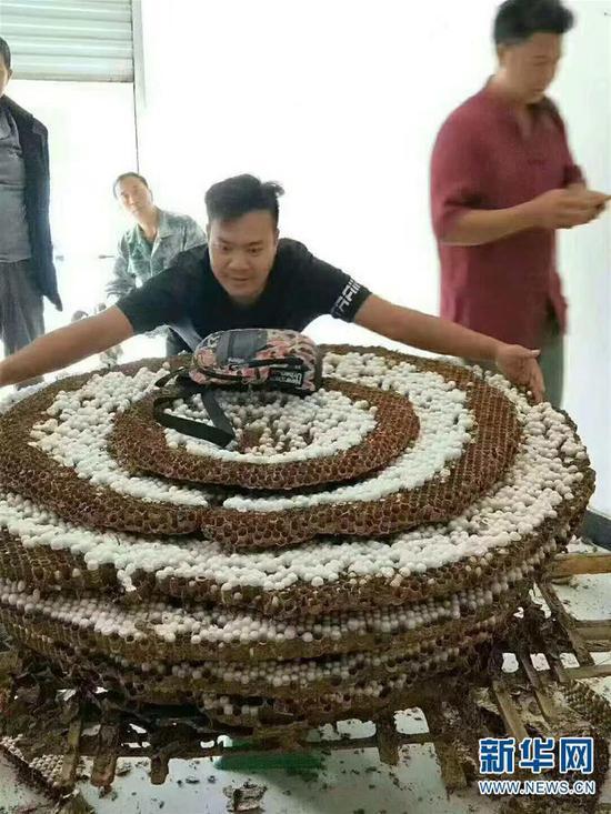 图为村民拍摄的中国大虎头蜂的巨大蜂巢。 新华社发(成都华希昆虫博物馆供图)