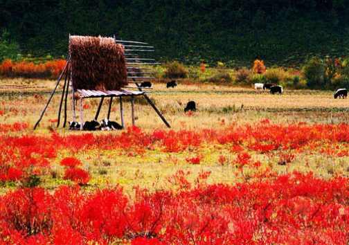 一次关于色彩的奇遇记——香格里拉