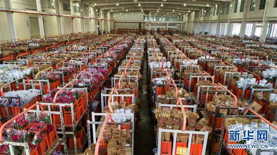 这是2月12日拍摄的中国云南昆明斗南国际花卉拍卖交易中心内待拍的各种鲜花。 新华社记者 江文耀 摄