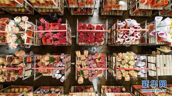 2月12日,在中国云南昆明斗南国际花卉拍卖交易中心,花商挑选并记录鲜花编号,以便在拍卖开始后竞拍。 新华社记者 江文耀 摄