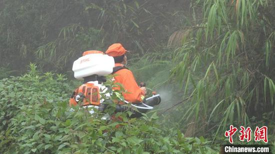 图为护林员用喷雾器对黄脊竹蝗进行灭除。 刀志楠 摄