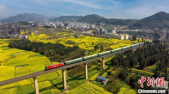 """图为""""春游专列""""行进在云南罗平万亩油菜花田中。 苏嵘 摄"""
