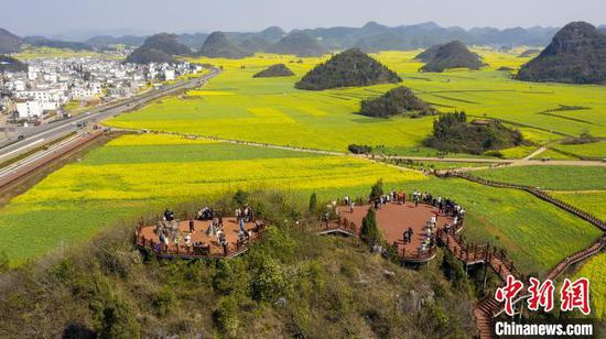 图为云南罗平的万亩油菜花田。 苏嵘 摄