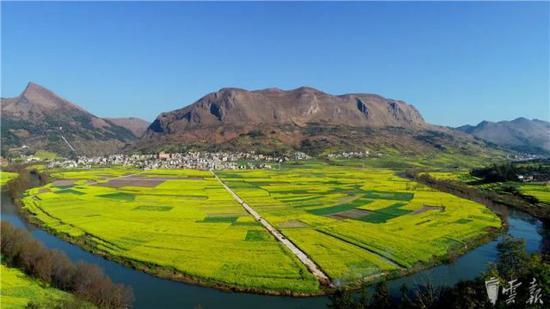图为2月10日拍摄的油菜花田(无人机拍摄)。