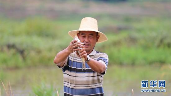 新华社昆明9月23日电题:稻香鱼肥庆丰收——稻农李老明的生态增收路