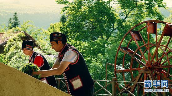 制作水碾茶(摄于5月29日)。新华网发 供图