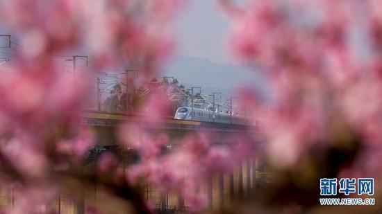 列车飞驰过一片桃花林。(视频截图)