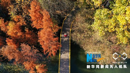 航拍洱海生态廊道一隅(2020年12月9日摄)。新华网 赵普凡 摄