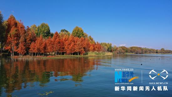 水杉与湖水相映成景(2020年12月9日摄)。新华网 赵普凡 摄