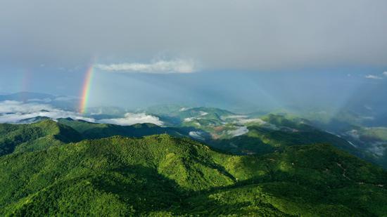 普洱市澜沧县原始森林上空出现彩虹。新华网 赵普凡 摄
