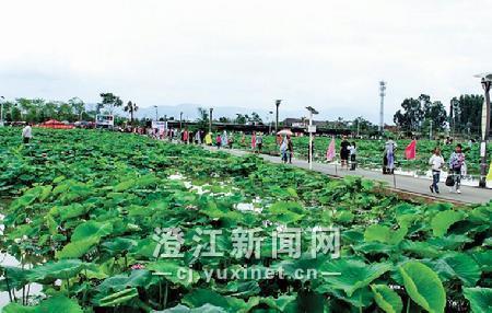 在左所荷藕庄园,前来赏荷的游人络绎不绝。