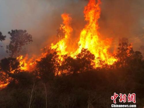 图为大理州大理市海东镇发生的森林火灾。 大理州森林消防支队供图