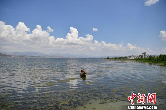 图为洱海滩地管理员在打捞水草、杂物。 刘冉阳 摄