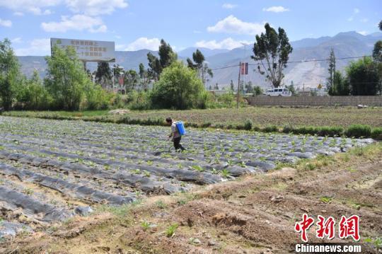 图为三营镇农民在施肥。 刘冉阳 摄