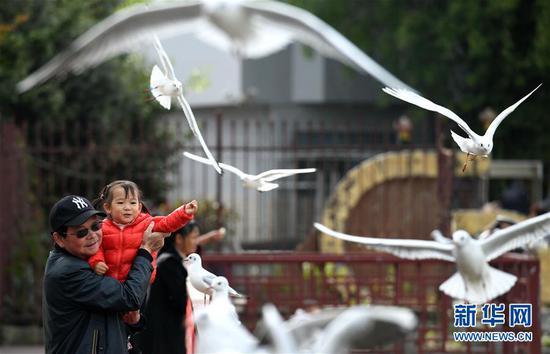 人们在昆明大观河边观赏前来越冬的红嘴鸥。