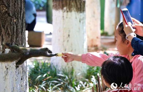 图片来源:@云南大学的松鼠 微博