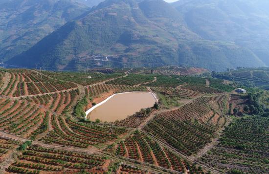 龙陵县万亩褚橙规模农业示范区