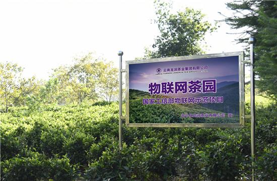 龙润集团的物联网茶园