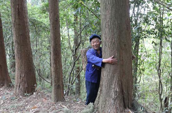 当年父亲高登祥种下的秃杉,如今一个人都合抱不过来了,高明荣说:抱着这棵树,我仿佛又和父亲在一起了。