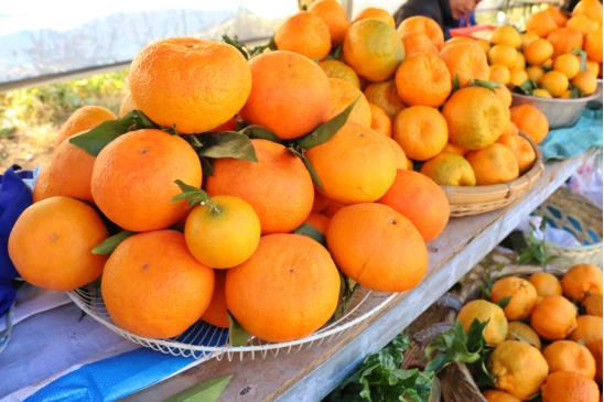 柑橘展售区