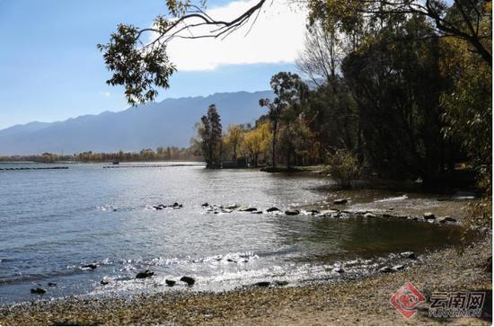 冬日,洱海湖风微凉,湖水清澈明净,湖面波光粼粼。记者 赵黎浩 摄