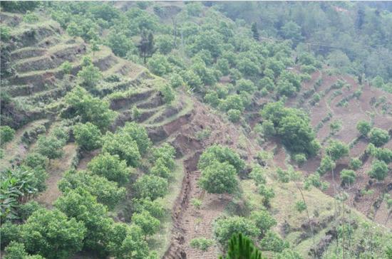 镇沅新一轮退耕还林造林140000余亩 生态经济效益凸显