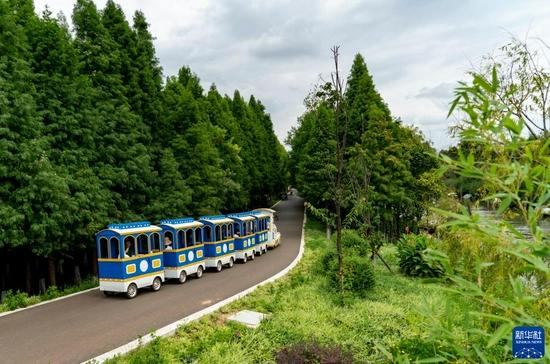 9月4日,载着游客的摆渡车在海洪湿地公园内穿行。