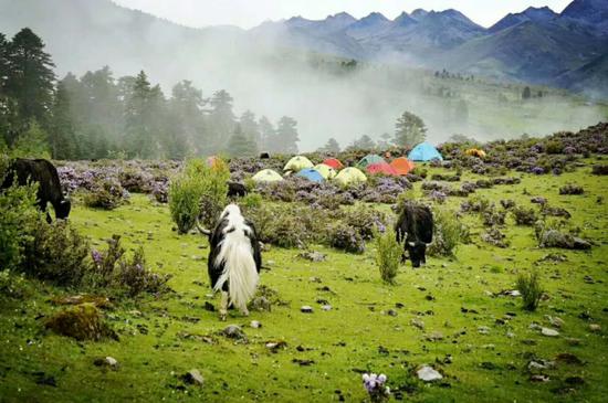 """「生态旅游」""""全球生态第一村""""——香格里拉秘境中的秘境"""