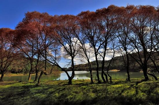 临沧,每棵树都漂亮