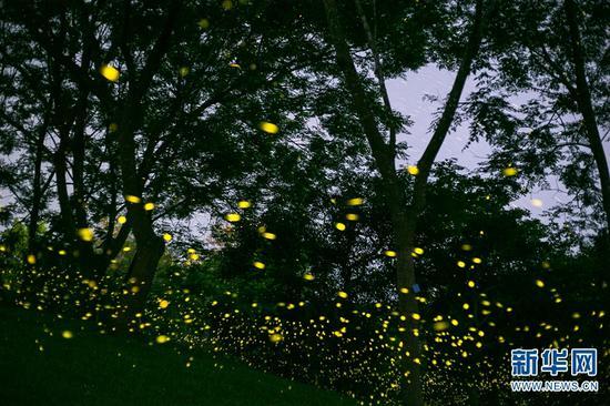 组图丨美翻 西双版纳热带植物园流萤飞舞宛若童话世界