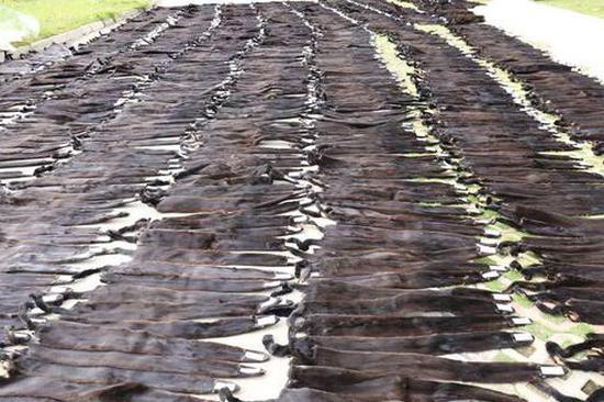 云南河口查获7384张貂皮 铺满整个院子
