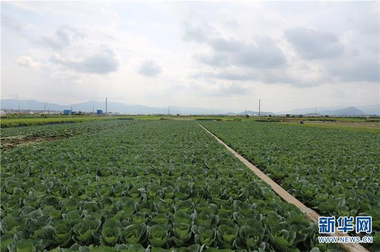 通海蔬菜种植基地