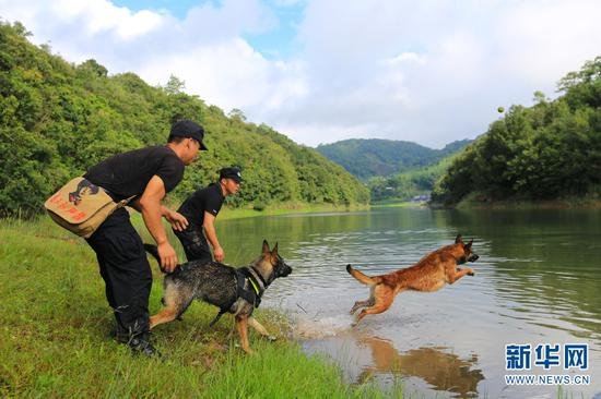 训导员带警犬进行游泳训练,增强警犬体能。(新华网 罗春明 摄)
