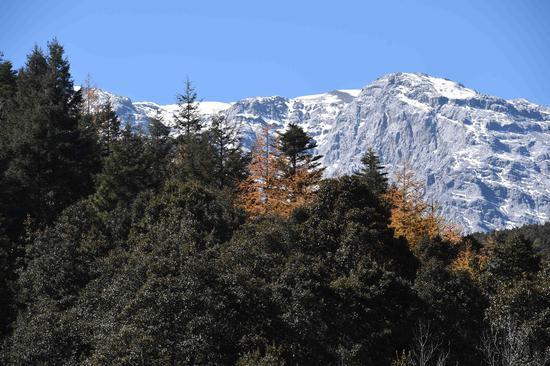 高清图丨云南丽江的初冬 玉龙雪山景色美如画