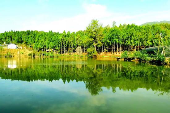 实施造林绿化后绿水青山