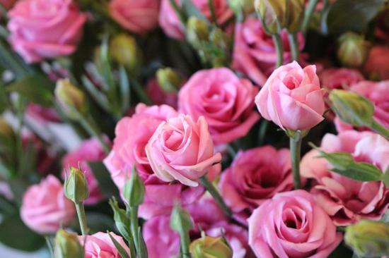 洋桔梗鲜切花
