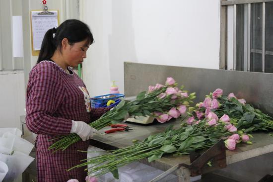 工人正在包装洋桔梗鲜切花