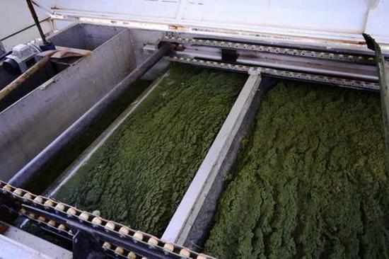 藻车,将蓝藻从藻水中分离。