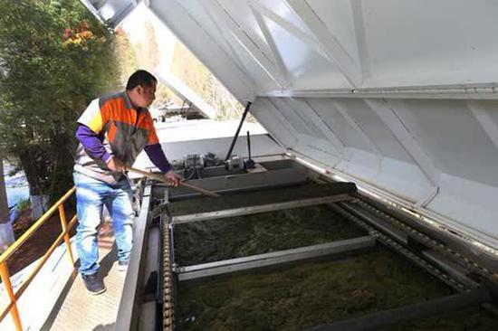 工作人员正在藻车上工作